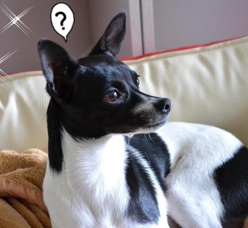 Ratero, Ratanero - bei uns heißt sie Amy.