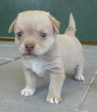 Ein wunderbarer Mischlingshund.