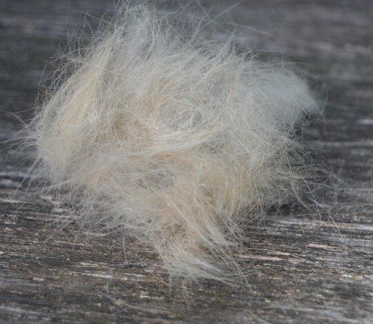 Lose Haare und Unterwolle lösen sich auf wundersame Weise.
