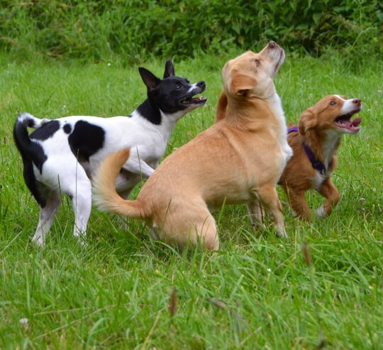 Hunde sollen freudig bei der Sache sein!