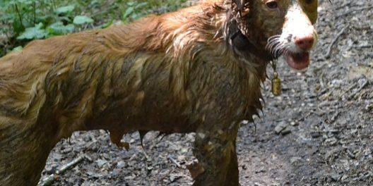 Hilfe-Mein Hund hat trockene Haut und Schuppen. Was kann ich tun?