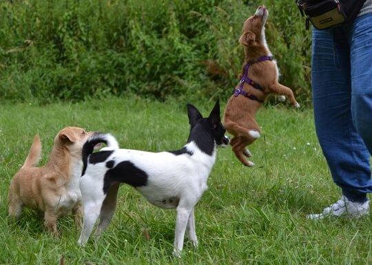Auch kleine Hunde wollen gefordert werden.