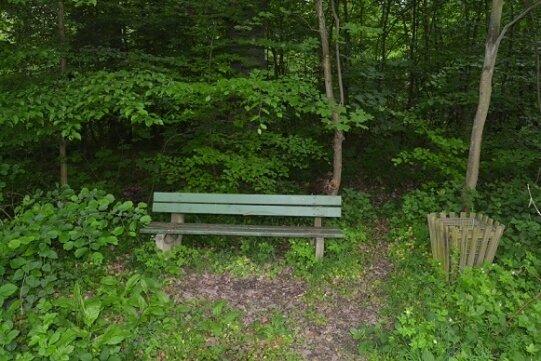 Eine Bank im Wald ist mehr als ein Ort zum Ausruhen.