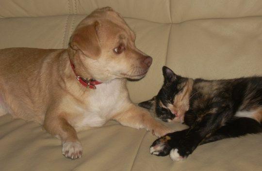 Schokolade schadet sowohl Hund als auch der Katze!
