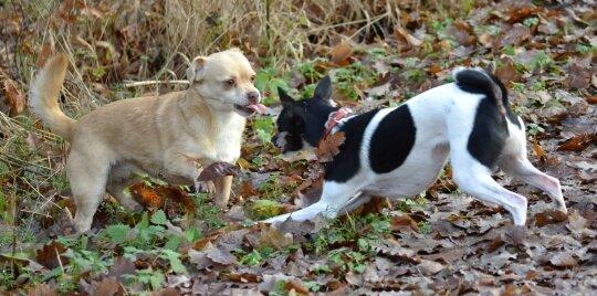 Kastrierte Hunde spielen gerne. Ja und?