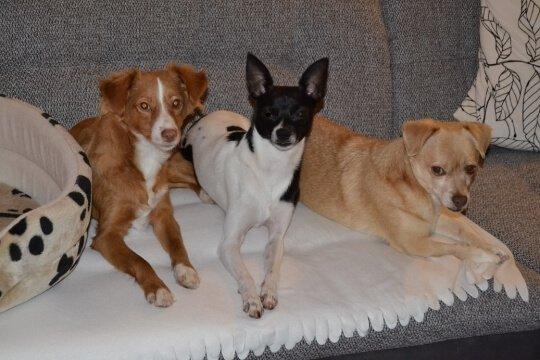 Hundepfote – Ratgeber, Blog – so muss Hund!