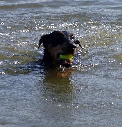 Der Bodensee bietet für Hunde genug Spaß. Und für die dazugehörenden Menschen natürlich auch...