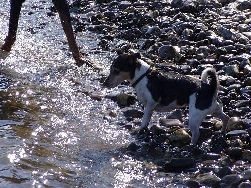 Große und kleine Hundefüße im Bodensee