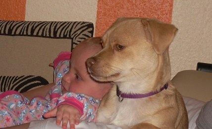 Kinder lernen viel durch Hunde. Wenn sie es selbst gelernt haben.