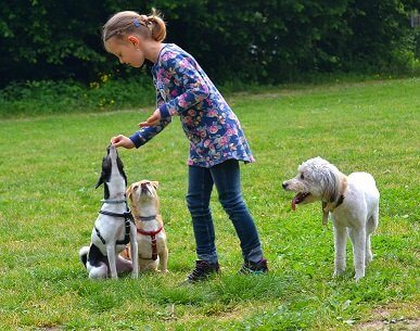 Hundetreff Bad Homburg