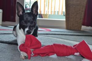 Amy nimmt ihr Lieblingsspielzeug mit auf Tour.