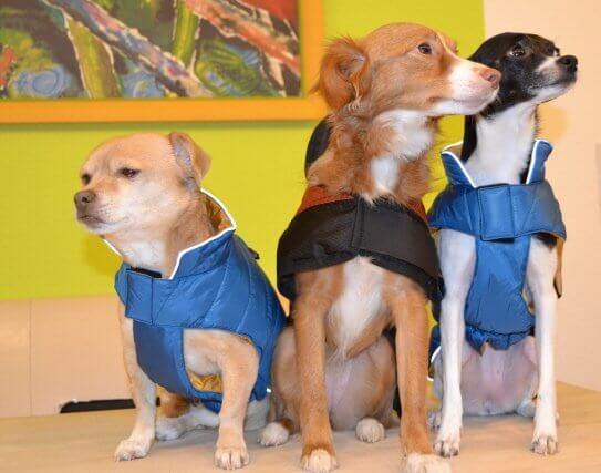 Hier mal alle drei mit Hundemantel.
