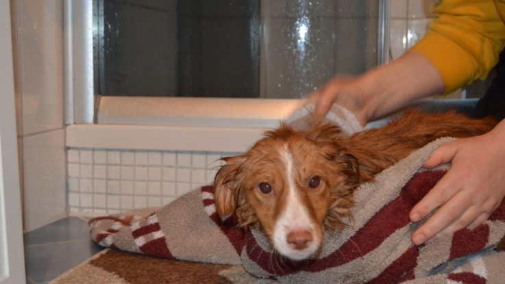 Das Handtuch - mein Freund und Helfer.