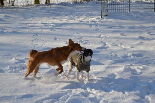 Amy kann trotz des Hundemantels normal toben.
