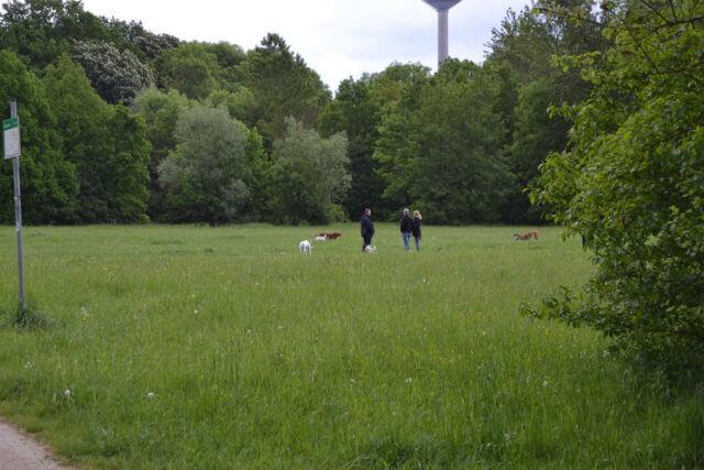 Hundeauslauf im Niddapark Frankfurt