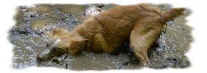 hundepfote.org