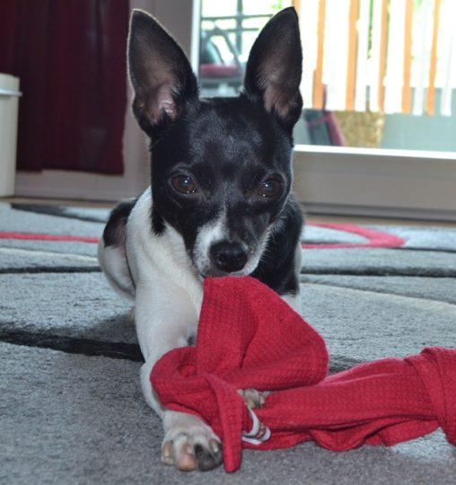Amy mit ihrem unverzichtbarem Schmusetuch