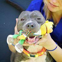 """Eine freundliche und fröhliche Betsy. Sie ist der beste Beweis für die Arbeit des """"Let's Adopt-Teams""""."""
