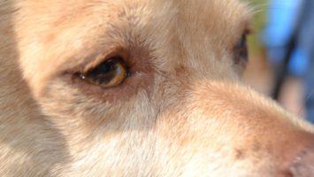 nele - ein Traumhund