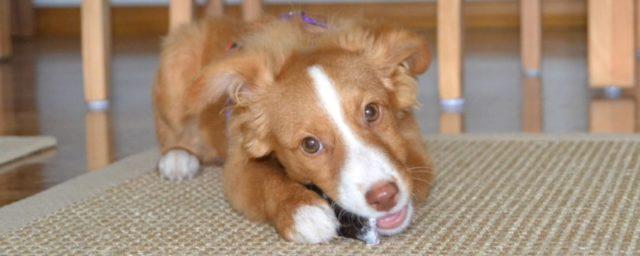 Veganes Hundefutter - das ist nicht artgerecht!