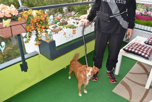 Joggingleine für Hunde