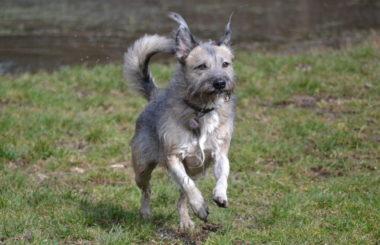Stadthund Landhund