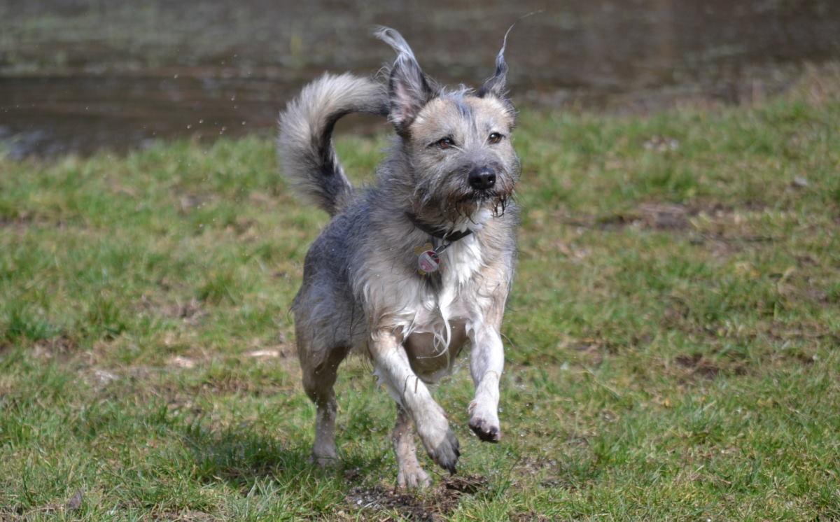 Stadthund oder Landhund
