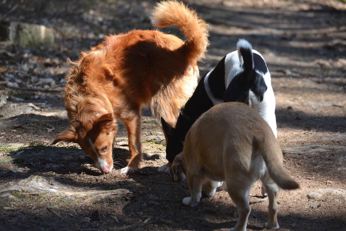 Mehrhundehaltung – 10 Vor- und Nachteile