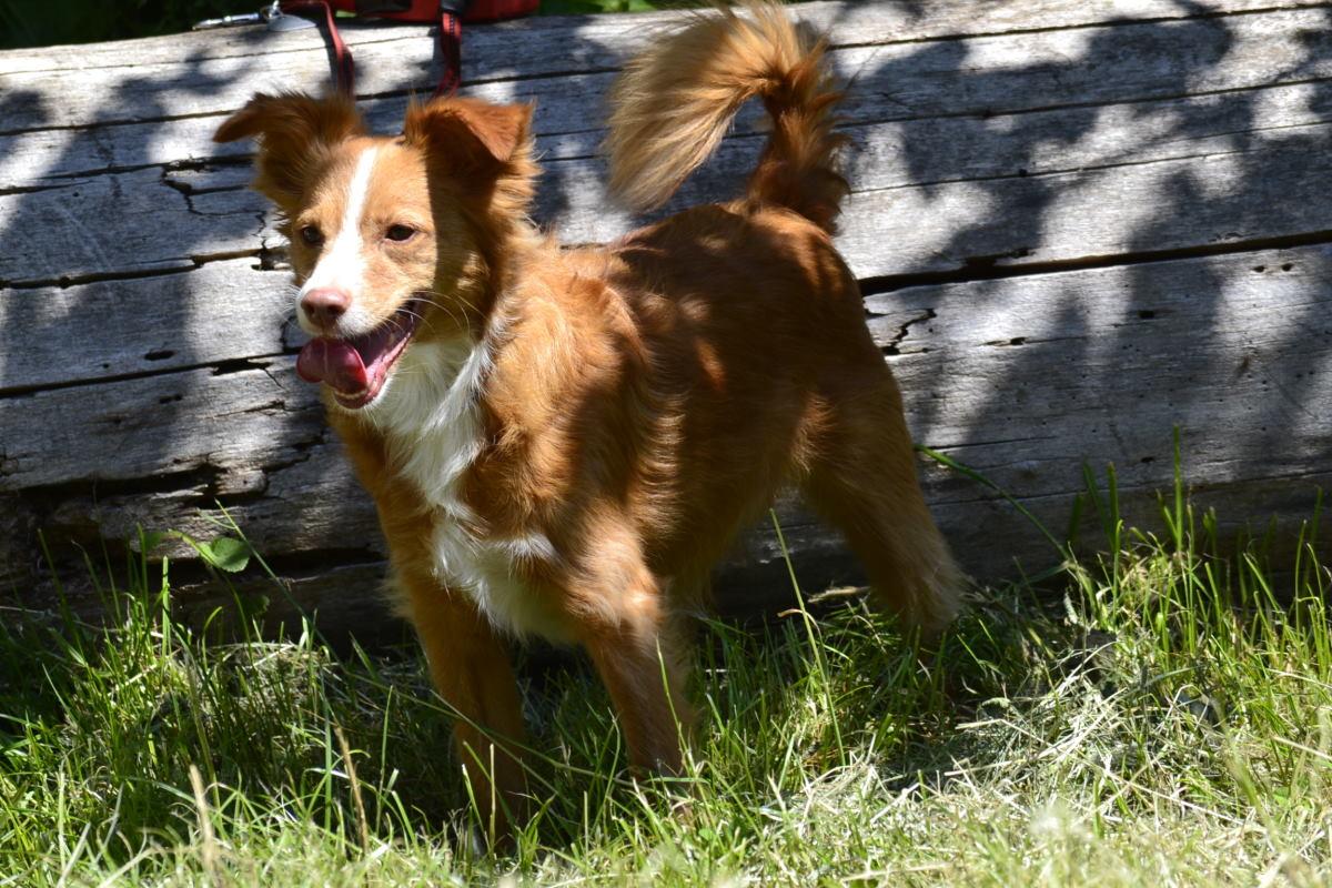 Erbrechen beim Hund – Ursachen und Behandlung