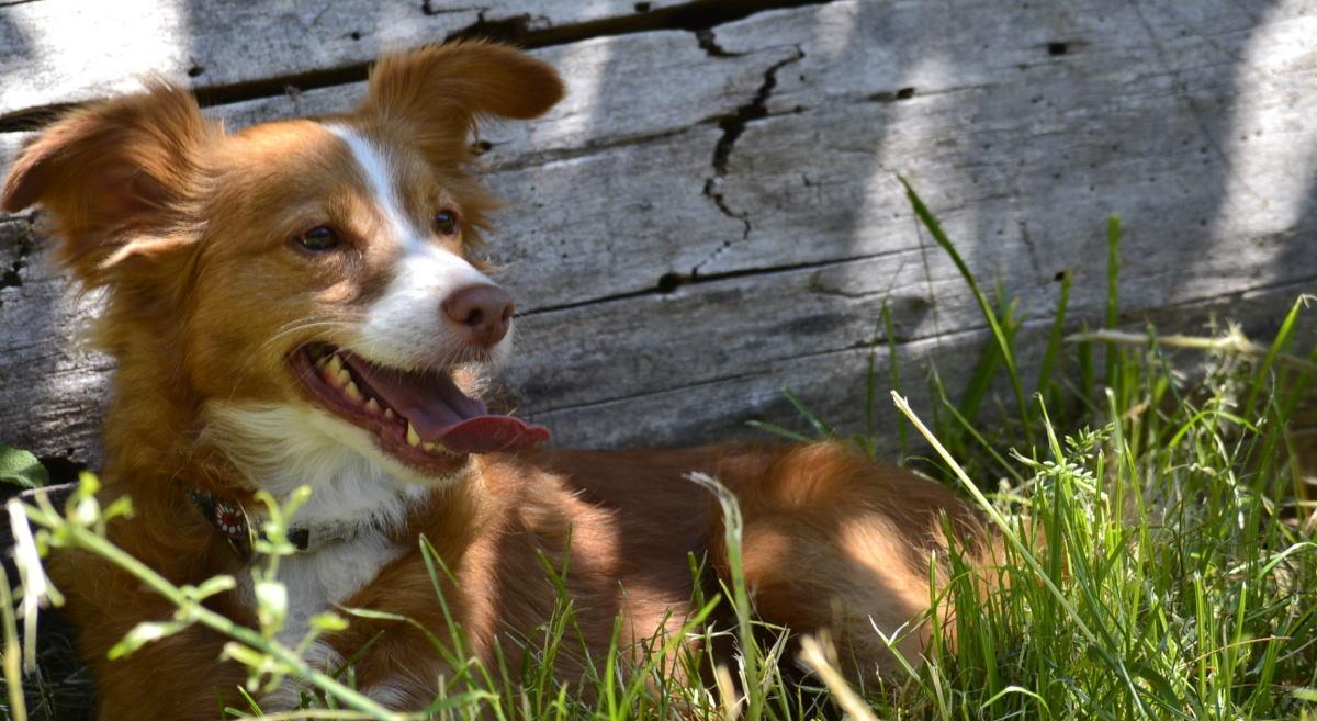 Zahnstein beim Hund – 2 Hausmittel