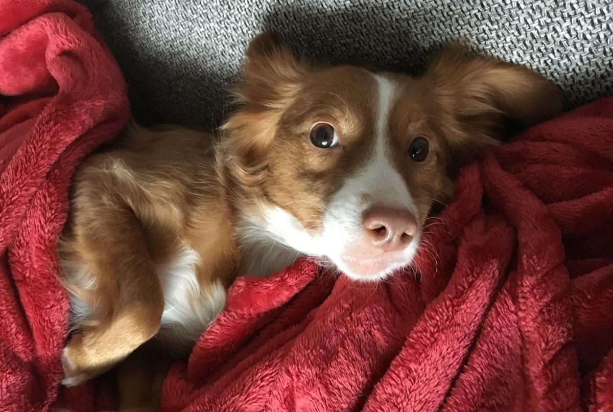 Erkältung beim Hund – erkennen & der Fellnase helfen