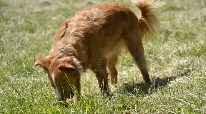 Hund erbricht gelben Schaum