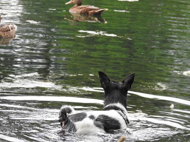 8 erstaunliche Fakten über Hunde