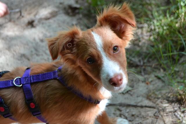 Hundewelpen erziehen – 10 Schritte