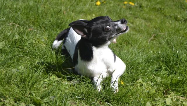 Hunde verstehen – 6 typische Verhaltensmuster