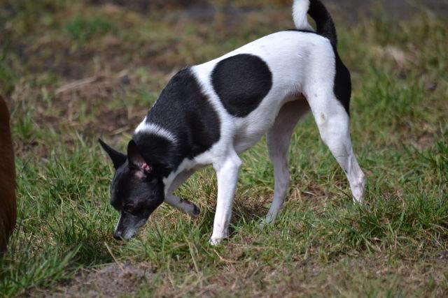 IQ-Test für Hunde – 11 nette Aufgaben