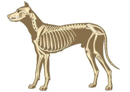 Arthrose beim Hund - so kannst du ihm helfen