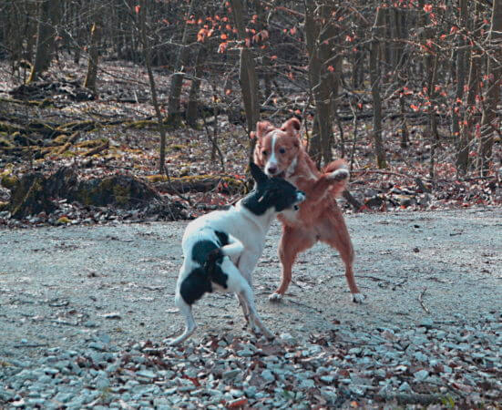 Mit drei Hunden durch die Corona-Zeit
