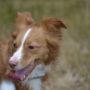 Angsthund – warum und was kann ich tun?