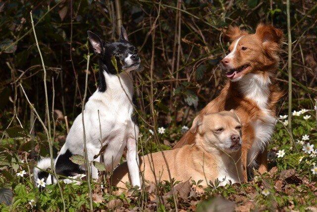 Hundetrainer – woran ist Kompetenz erkennbar?