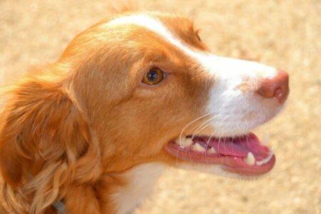 Hund und Mundgeruch