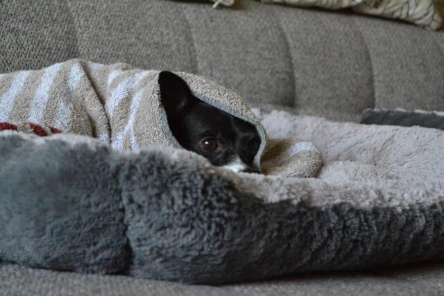 Tierbedarf: Was braucht mein Haustier unbedingt für die Herbstmonate?