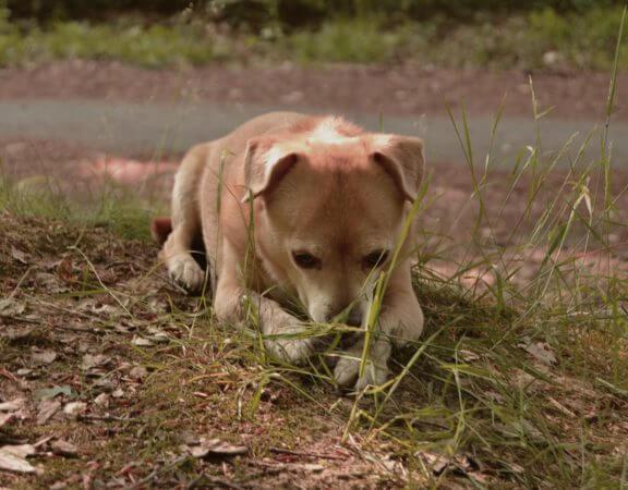 Niereninsuffzienz beim Hund