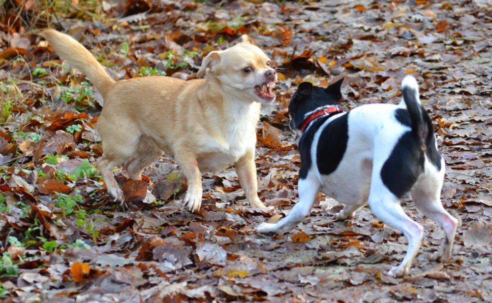 maulgeruch hund