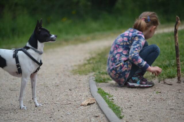 Hunde und Kinder – Vorsicht!