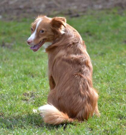 Angsthund - warum und was tun