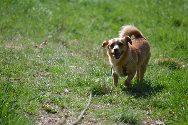Mischlingshunde – Promenadenmix –  viele Begriffe für den Mischling