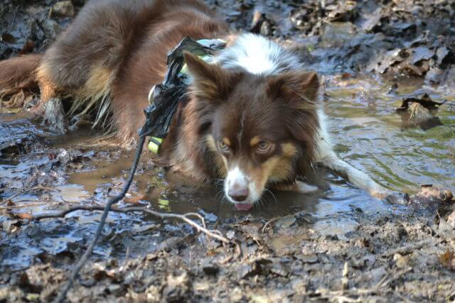 Hund entlaufen – GPS Tracker
