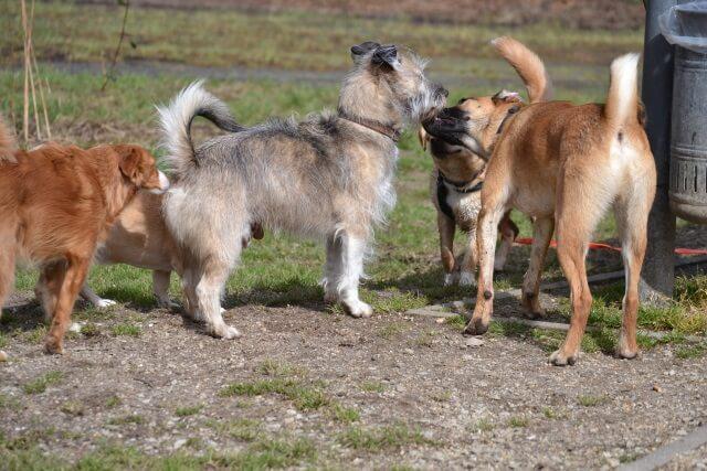 """Die meisten Hunde sind willkommene """"Opfer""""."""
