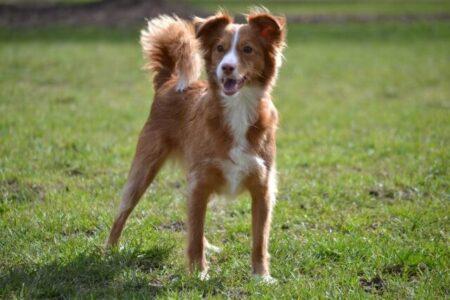 Jojobaöl als Pflegemittel für Hunde